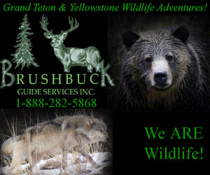 BrushBuck Wildlife and Scenic Tours - Wildlife tours