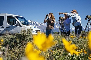 Wildlife Expeditions - Connecting people to Nature : Yellowstone and Grand Teton Park Tours. Close-up viewing of wildlife, customized vehicles, half-day, full & overnight trips. Tour & activity packages.