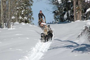Continental Divide Dog Sled Adventures :: Day trips & half-day trips into the Teton & Shoshone Nat'l Forests. Snowshoe/Dogsled and Snowmobile/Dogsled combos. Overnight yurt & lodge trips, too!