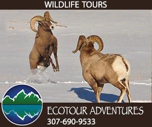 EcoTour Adventures