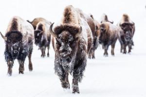 Wyoming Guide Company | Grand Teton Winter Tours