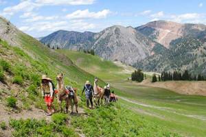 Wildland Trekking | Llama Treks into Tetons