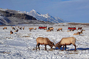 Kids Love A National Elk Refuge Sleigh Ride