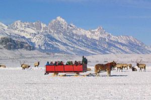 National Elk Refuge | Guided Sleigh Rides