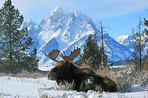 Teton Scenic Wildife & Park Tours