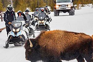 Scenic Safaris - snowmobile rentals & tours