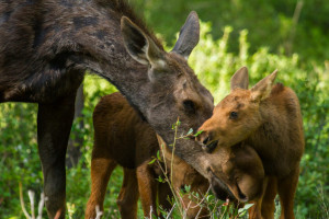 Wyoming Wilds - Family-Friendly Wildlife Tours