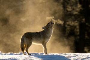 Wyoming Wilds - Grand Teton Half Day Winter Tours