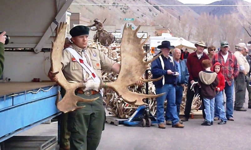 Jackson Hole Wy Antler Auction Alltrips