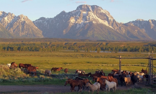 Triangle X Ranch Wyoming Grand Teton National Park