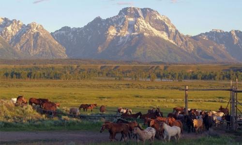 Triangle X Ranch Wyoming Grand Teton National Park