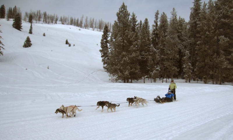 Grand Teton Park Dog Sledding