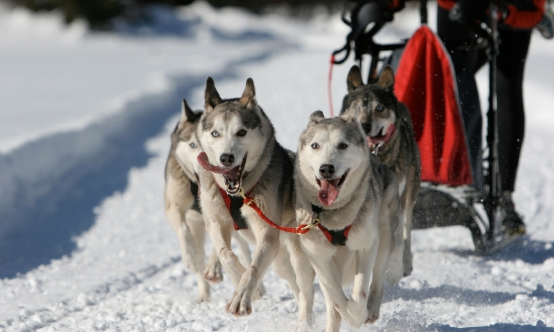 Grand Teton Wyoming Dog Sledding