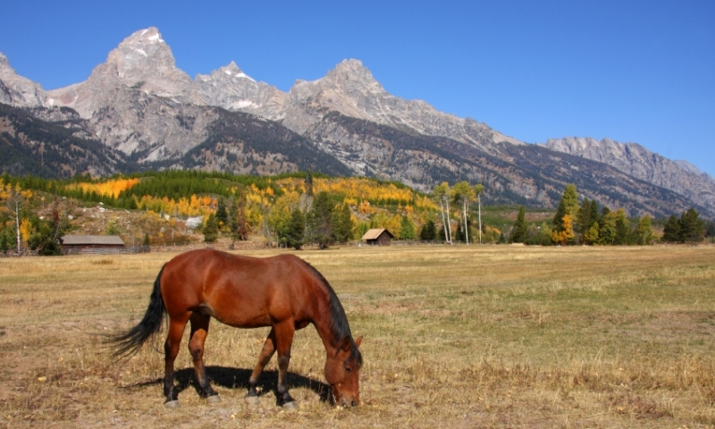 Horse Horseback Riding Grand Teton National Park Ranch