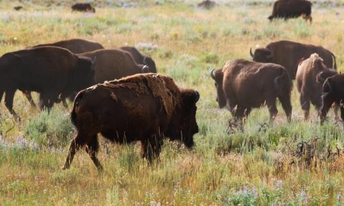 Grand teton national park elk deer hunting trips for Wyoming non resident fishing license