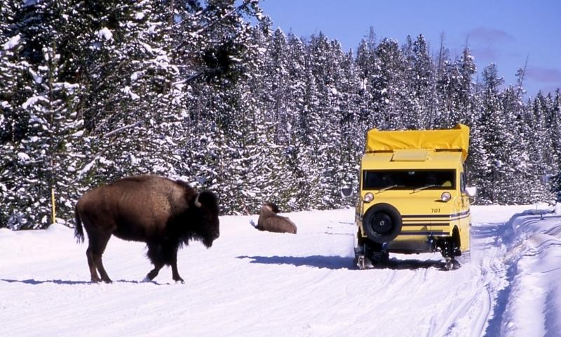 Snowcoach Tour Yellowstone